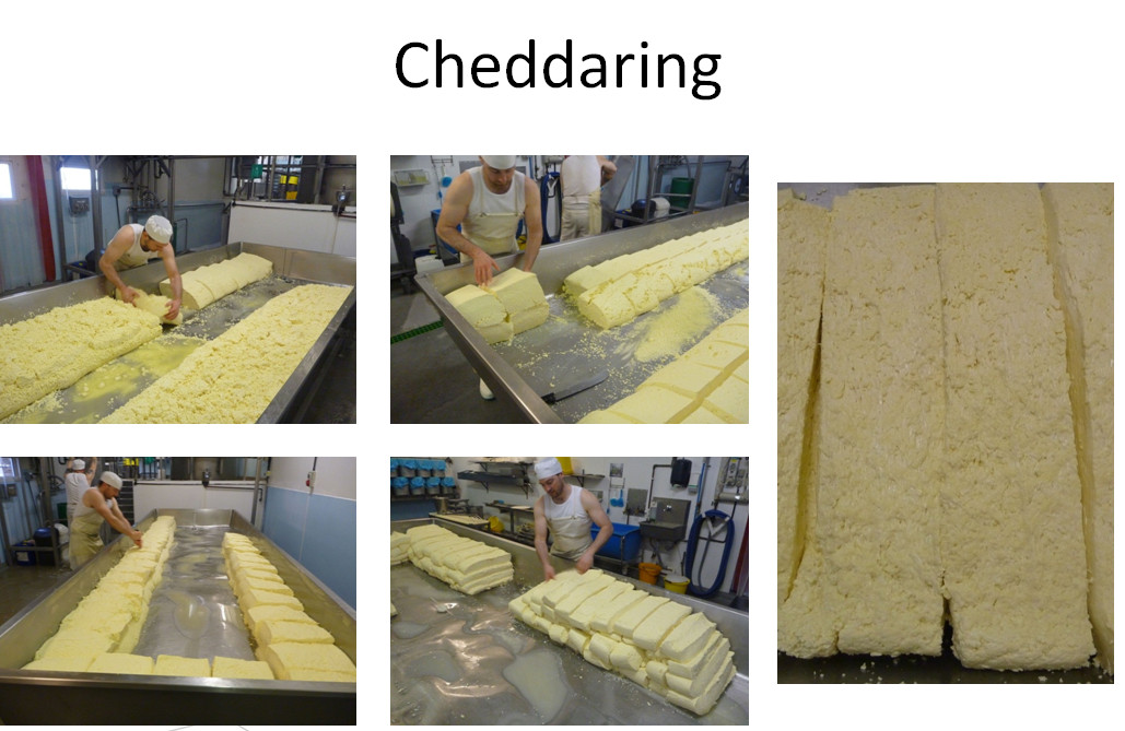 Cheddaring process - The Courtyard Dairy