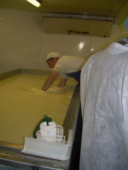 Cheesemaking errington