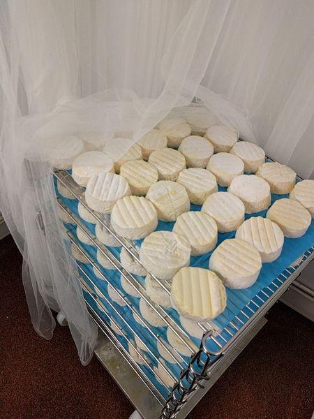 Cavanbert Corleggy Cheese
