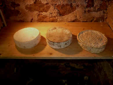 Different tomme cheese ageing