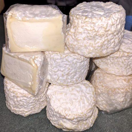 Dumpling / Bartlett Cheese