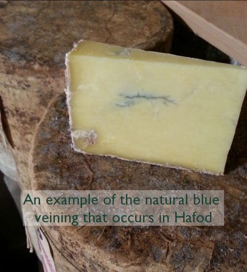 Example blue farmhouse cheddar