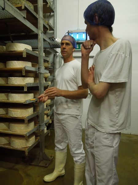 Grading red leicester cheese