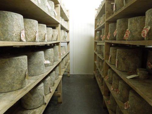 Hafod cheddar cheese 8