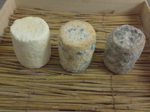 Edible mould on cheese
