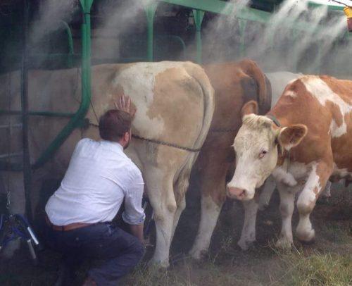 Nick Millard Cheese (Holden Farm)