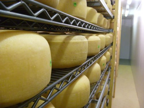 Old winchester cheese ageing