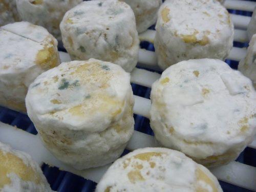Penicillium Mould on Cheese