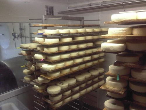 Reblochon cheese maturing