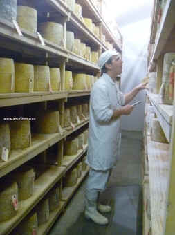 Sam holden grading Hafod cheese picture