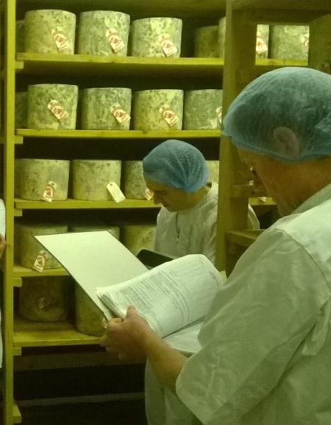 Selecting Hafod Cheese