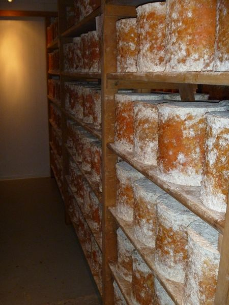 Stilton ageing picture