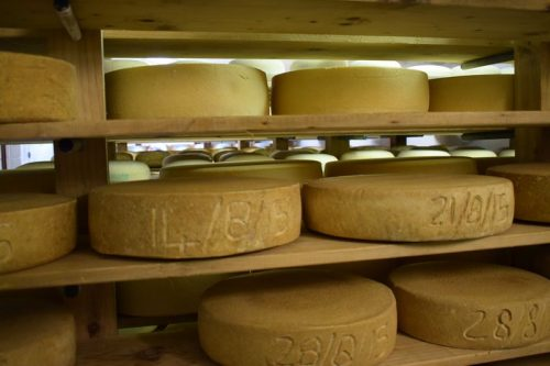 Summer Field Alpine Cheese Maturing