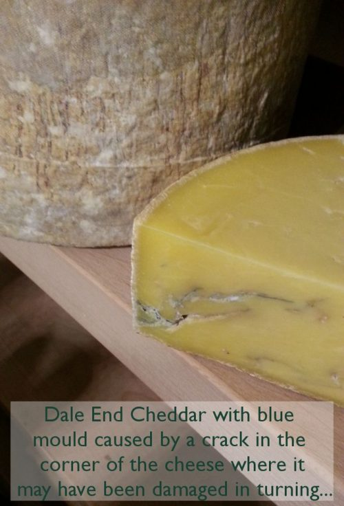 traditional-cheddar-blue-picture
