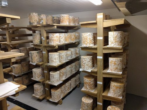 Young Buck Cheese Maturing Room
